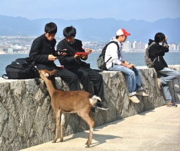 Lunch time Miyajima style