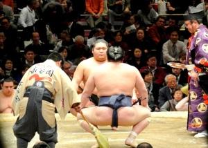 sumo#3